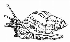 Mollusk Coloring Page - Animals Town