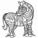 Coloring Zebra Pages sketch template