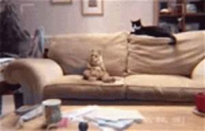 Animated Gifs - dancing cat gif - Threadbombing