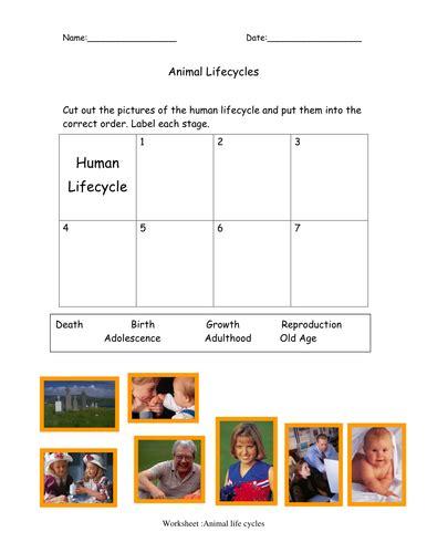 human cycle worksheet