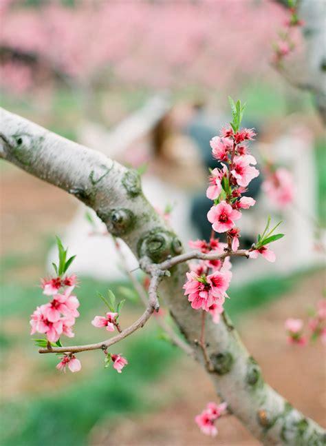 Cherry Blossom Branch Elizabeth Anne Designs: The