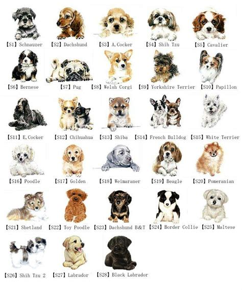 Classification of Domestic Dog learn fun smart
