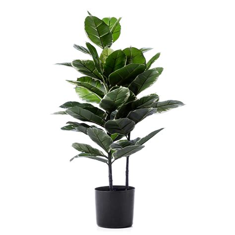 potted plant home republic rubber fig potted plant homewares pots plants adairs online