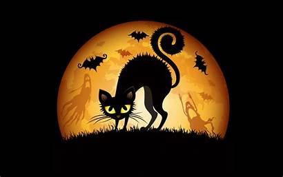 Halloween Wallpapers Bats Widescreen Cats