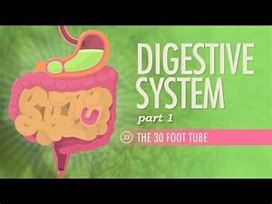 Digestive System Part 1  Crash Course A U0026p  33