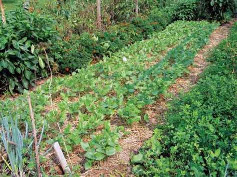 grow cover crops for the best garden soil organic