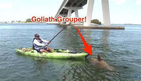 kayak fishing goliath grouper beginners fishingtherapy kayaksherpa saltstrong