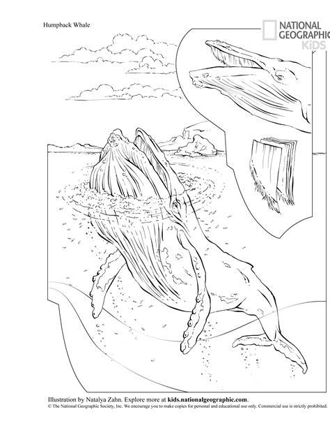 hooray  humpbacks national geographic education blog