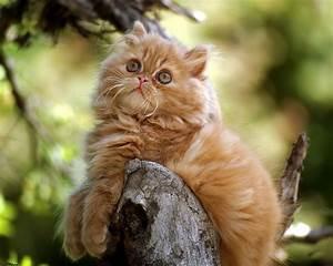 Cute cats #4 | ... Cute Cats