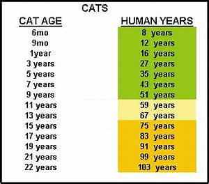 how old is your pet in people years