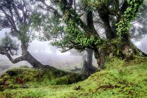 Circumnavigation Fog Within The Laurel Forest Madeira