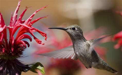 what colors are birds attracted to are hummingbirds really attracted to
