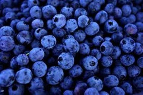 what color are blueberries 10 facts about blueberries fact file