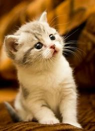 Little Kitty Cat