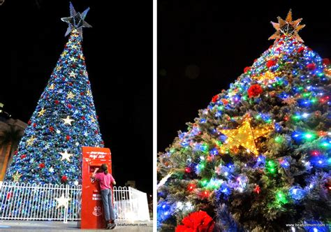 28 best live christmas trees brisbane christmas