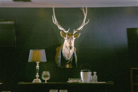 Taxidermy Home Decor: Vintage Taxidermy: How To Buy Vintage Taxidermy For Home