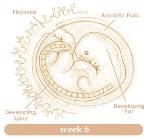 Saptamana 9 de sarcina simptome