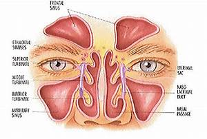 Just Muscles Best Sinus Relief Exercise Ever