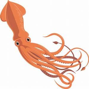 Giant Squid Vector   www.imgkid.com - The Image Kid Has It!