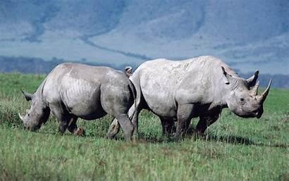 Wildlife Wallpapers Desktop Backgrounds Animals Background Watching