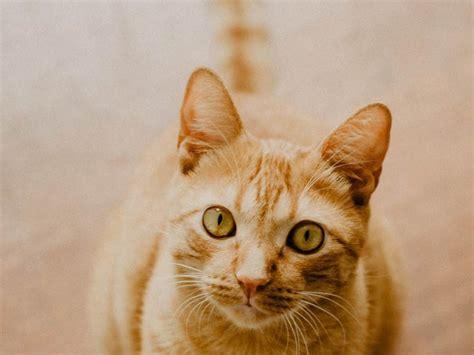 Gato | complete gatos silver inc. MI GATO ES UN TIGRE… ¿O UN LEÓN?: COMPORTAMIENTO SOCIAL ...