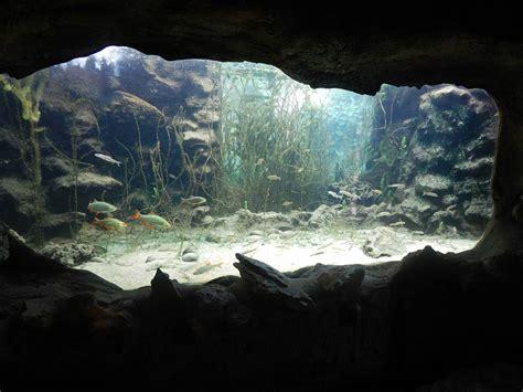 l aquarium du perigord noir les lavandes g 238 tes en p 233 rigord noir dordogne