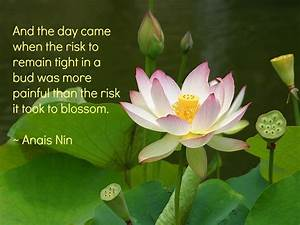 buddha lotus flower Quotes
