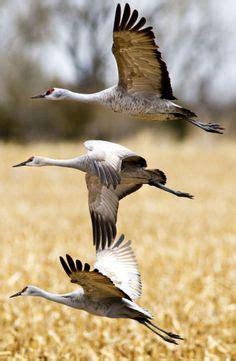 Lake Michigan Cormorant Bird
