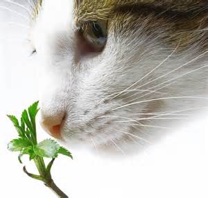 how often should you feed your cat blurbal exchange how often should you give your cat catnip
