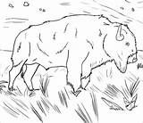 Buffalo Coloring Water Pages Coloringbay sketch template