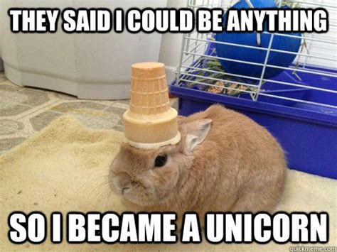 Funny Unicorn Memes - believe it or not these are all unbelievable but true facts