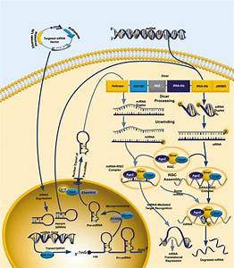 RNA interference overview | Abcam