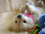 Funny Puppy Cute Baby Animals