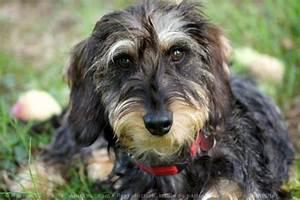 vente de chien bouledogue francais