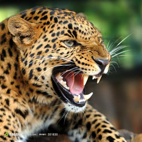 Hd Photography Wallpapers Best Photography Wallpapers 凶猛猎豹图片 素材公社 Tooopen Com