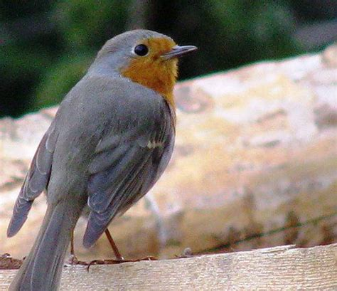 birding in southeast michigan tips and guide to birds
