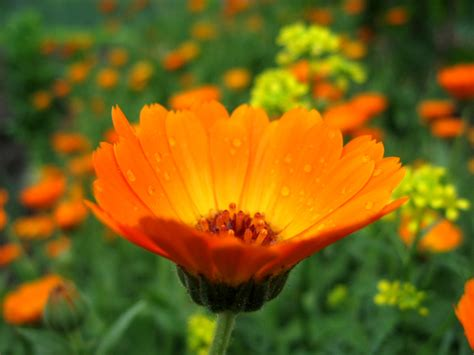 beautiful photos free a beautiful flower stock photo freeimages com