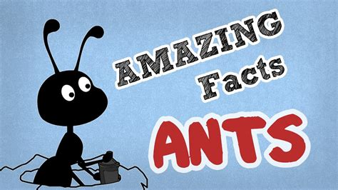 fun facts about ants for preschoolers amazing facts about ants cool ant facts omg facts 219