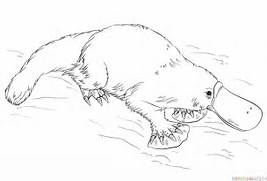 How to draw a platypus...