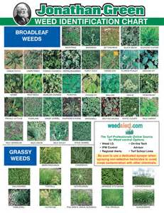 HD wallpapers printable leaf identification chart