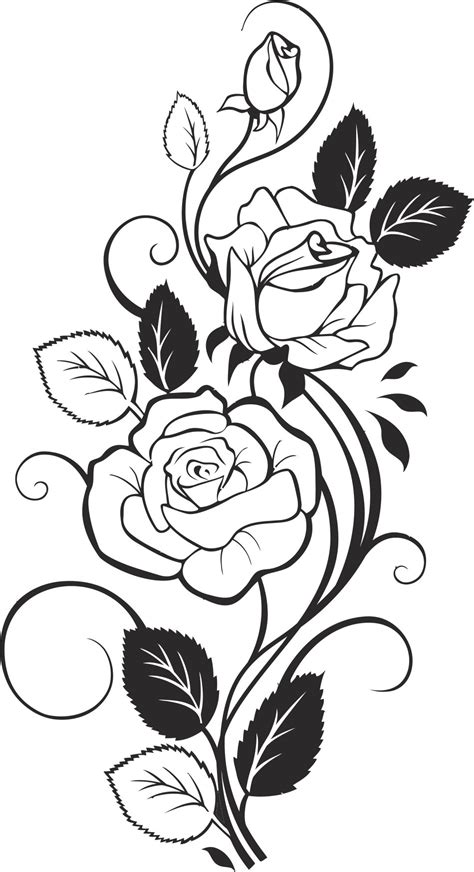 black  white rose vector  vector cdr