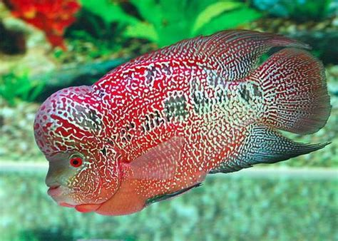 images  aquariums  pinterest fish tanks