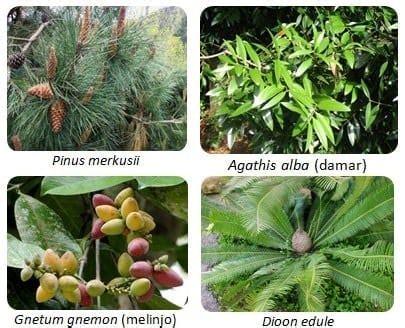 pengertian ciri klasifikasi tumbuhan berbiji