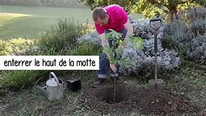 Planter Un Figuier : comment planter un figuier youtube ~ Melissatoandfro.com Idées de Décoration