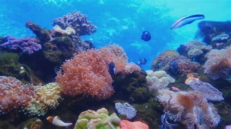 underwater video zoom virtual background youtube