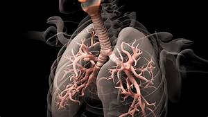 Nervous System May Hold Key To Treating Asthma Attacks