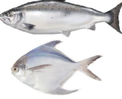fish meaning  tamil telugu marathi kannada malayalam