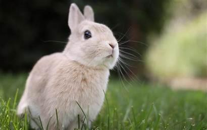 Bunny Rabbit Desktop Bunnies Wallpapers Very