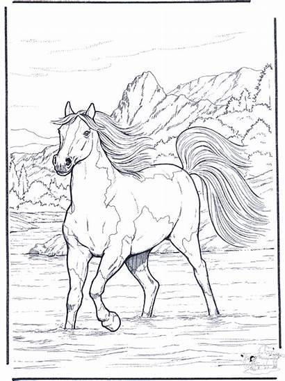 Coloring Horse Pages Horses River Realistic Colouring
