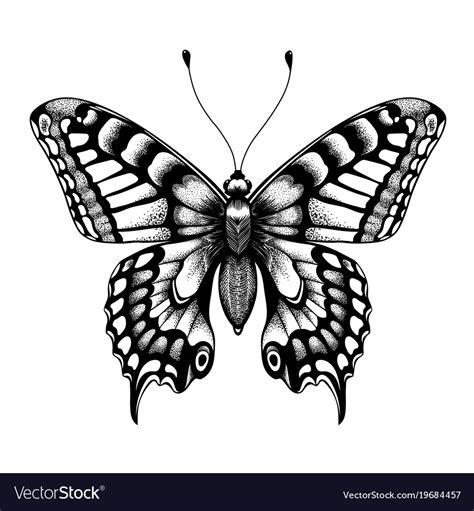 silhouette  butterfly black  white tattoo vector image